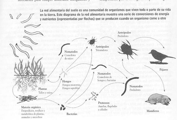Toma conciencia compostando salvamos al planeta manual for Suelo organico para dibujar